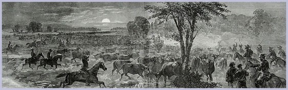 The_Great_Cattle_Raid_at_Harrison's_Landing