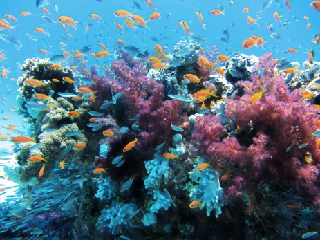 underwater_sea_life